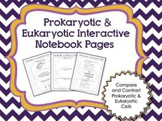 Prokaryotic and Eukaryotic Interactive Notebook Pages