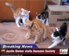 funny animals, justin bieber, animal shelters, funny animal pictures, funny pictures