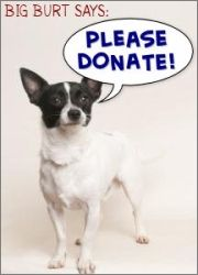 Donate to the SPCA. The Santa Cruz SPCA appreciates and acknowledges all donations to support its programs and services. Contributions are frequently received in memory of human family and friends as well as animal companions. We are a non-profit charitable organization relying entirely on donations for support of our programs.