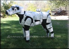 Awesome Stormtrooper Costume for a Dog... Coolest Halloween Costume Contest