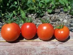 How to Plant a Vegetable Garden for Beginners