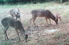 Areas that Make Bucks 'Killable' | Outdoor Channel, #DeerCamp, #Hunting