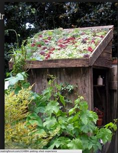 garden shed with sedum roof