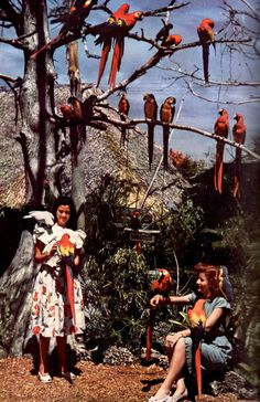 Miami's Parrot Jungle (November, 1950)