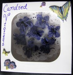 candied violets using milk instead of eggs