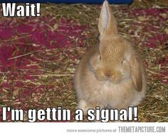 best funny bunny picture