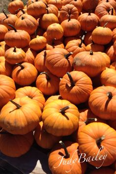 One of my fall pumpkin photos