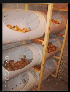 """""""Barrels turned into storage bins in the root cellar for winter food such as apples, onions, potatoes and squash"""""""