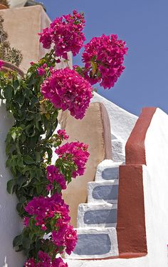 Santorini stairs on a hot summer's day-Greece!  <3