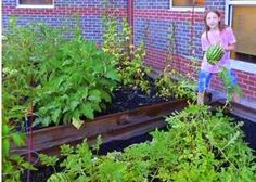 Apply for a Grant - kids 9-16 only allowed ... Katie's Krops will fund your garden ...
