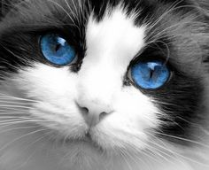 Big beautiful blue eyes