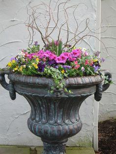 Spring Planter ~ Viola's, Geranium, Tulips & Curly Willow