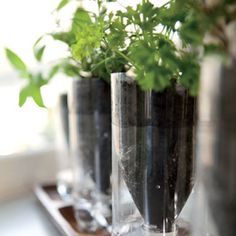 Self-watering herb garden made with plastic water bottles.