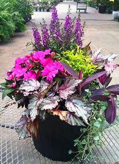 Blue angelonia, Emerald Lace sweet potato vine, tradescantia Purple Heart, Silver Falls dichondra, rex begonia, New Guinea impatiens