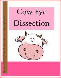 This packet has EVERYTHING you need for a cow eye dissection!!    Directions and questions for dissecting a cow eye, an eye diagram, 2 additional activities and ALL answer keys!!!  Original and USEFUL!!!