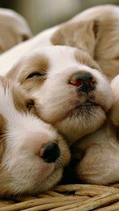 Puppy pile ❤️