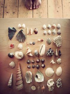treasures, beaches, sea shell, coconut, collect seashells, nature design, sell seashel, lemon lime, bedrooms
