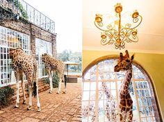 Conde Nast Traveler love Giraffe Manor