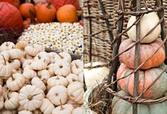 Sharing the Autumn Bounty in The BULLETIN at Terrain #pumpkins #white #orange