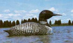 "In the warmer months, in the middle of Silver Lake in Virginia, Minn., you're bound to catch a glimpse of a floating loon named Ginny. But Ginny isn't like any loon you've ever seen. She's a 21-ft-long monument built by the ""Land of the Loon"" festival committee. Built of fiberglass over a metal frame in 1982, just a few years after a smaller version was vandalized. It's tethered to the bottom of the lake by a steel cable. larg roadsid, minnesota lake, silver lake, lakes, minnesota attractions, largest float, float loon, roadsid attract, minnesota statues"