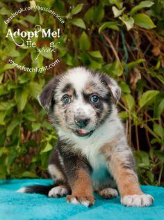 Twinkle is an adopta
