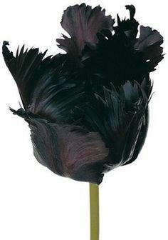 black flowers | Tumblr