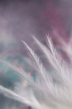 ready to ship breathe feather dreamy surreal ethereal fine art macro photograph pink blue purple white bokeh 5x7