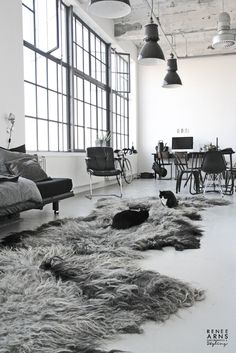 Grey chairs, feather rugs, big windows, metallic lamps, cats