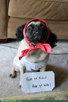 this is just too funny.  that poor pug looks so miserable, i feel bad for laughing. animals
