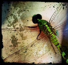 #dragonfly #green