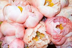Peonies by Terry Richardson. <3