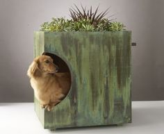 DIY doghouse/ planter. green roofs, dachshund, pet beds, dog houses, dog beds, planter, cat houses, garden, new dog