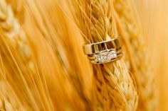 Wedding Rings on wheat