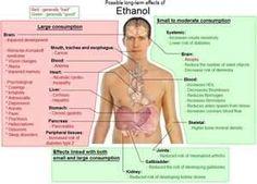 Effects of ETOH nervous system, news, folk, smoking, alcohol, swiss alp, families, blog, human body