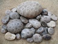 fossil hunting, petoskey stone, petoski stone, state stone, rock