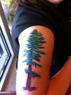 My redwood tattoo. Love it!!