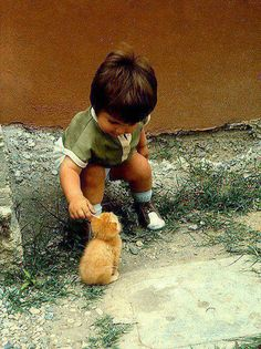 Sooo Very Sweet :) little children, tabby cats, anim, ear, little ones, pet, baby kittens, kids, new friends