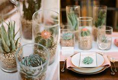 more cactus ideas