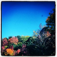Michigan's Fall Colors! #puremichigan
