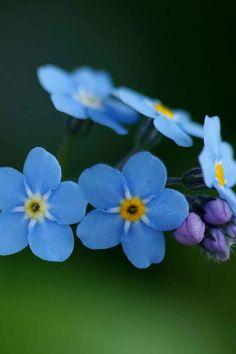 flor azul de ceramica