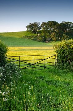 Pasture at Dawn, Dunster Somerset, England