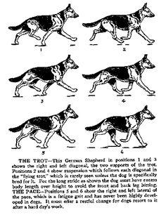 Oricom Technologies Walking Dogs
