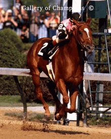 1978 Triple Crown Winner. Affirmed (February 21, 1975 – January 12, 2001) was an American Thoroughbred racehorse who was the eleventh and most recent winner of the United States Triple Crown of Thoroughbred Racing. Affirmed was also known for his famous rivalry with Alydar, whom he met ten times, including in all three Triple Crown races and where Alydar became the first racehorse to finish second in all three Triple Crown races.    He was the great-great-grandson of Triple Crown winner War Admiral through damsire Crafty Admiral, and thereby the great-great-great grandson of Man o' War who won two of the three Triple Crown races himself. He has other noteworthy horses in his pedigree like Gallant Fox, winner of 1930 Triple Crown and sire of the 1935 Triple Crown Winner Omaha, as well as English Derby winner Mahmoud.