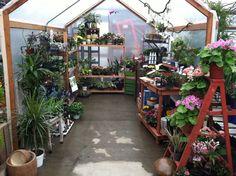 "the small ""green house"" inside Al's in Gresham"