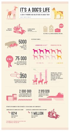 It's a Dog's Life infographic #caninecommunityreporters #wccrtv #pamppllc #caninemarketing #petinfographics #doginfographics #dogs