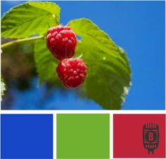 Color: Berry Power by Branigan Communications: Royal blue, green, berry red.