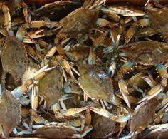 camp, lake pontchartrain, blue crab, louisiana blue
