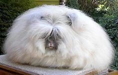 angora easter bunny