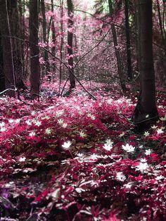 Pink Magic forest ,Espoo, Finland