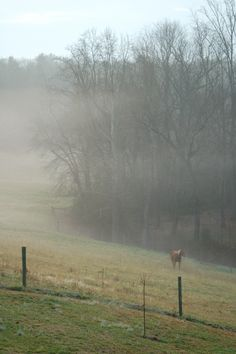 The neighbor's horse on a warm January morning